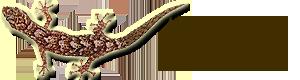 agama_logo.png