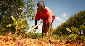 Agriculture-harvest-or-planting